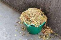 """阜阳官方回应""""小学营养餐被丢弃溢出垃圾桶"""":正在调查"""